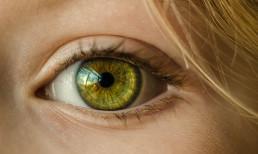 Das menschliche Auge - sichtbarer Teil