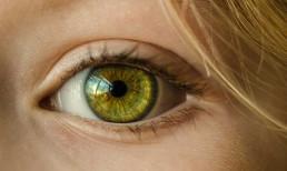 Der sichtbare Teil des Auges - uvex Schutzbrillen